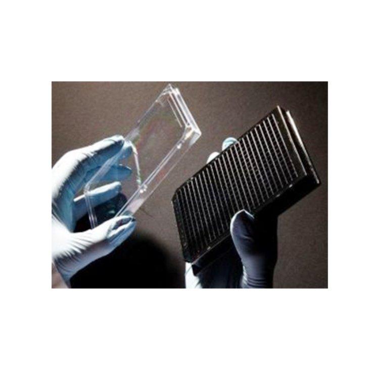 3D Hücre Hizmetleri Biopta