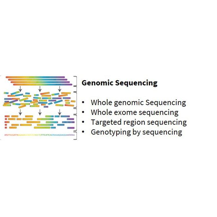 Genomik Sekanslama Hizmetleri(DNA ve RNA)Bioserve