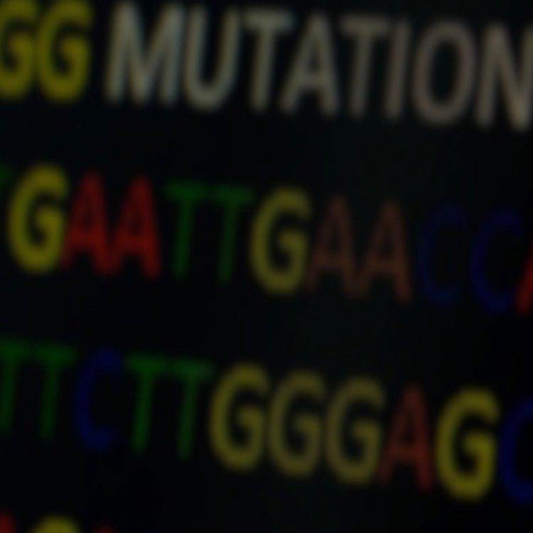 Non-İnvaziv Prenatal Test Bioserve
