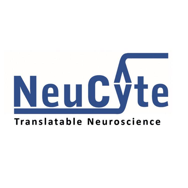 SynFire GABAergic Kaynaklı Nöron Kiti(Küçük)Neucyte Labs