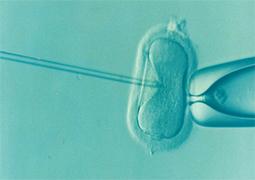 IVF-Tüp Bebek / Suni Tohumlama - Veterinerlik